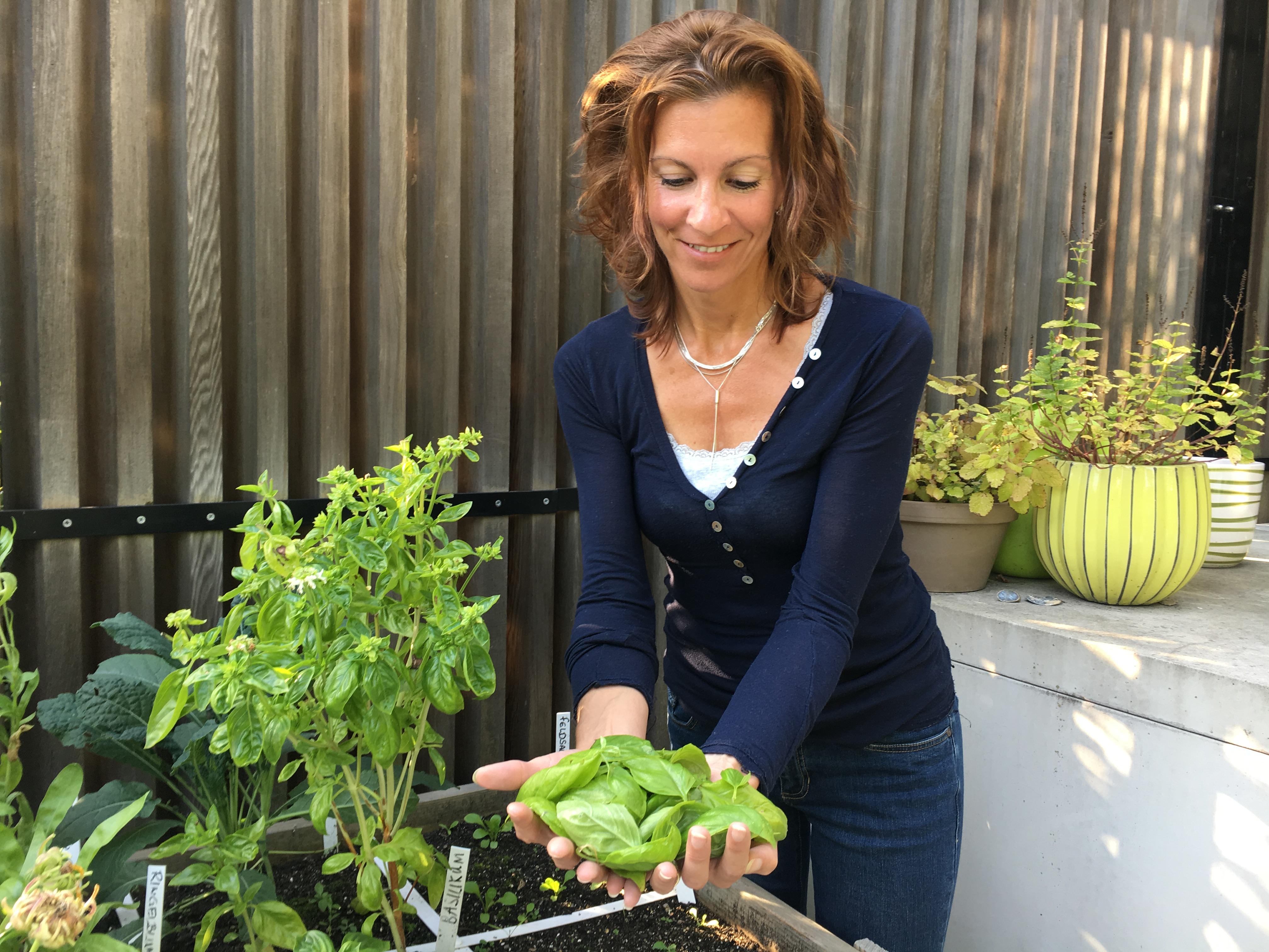 Der Geniale Gemüsegarten Basilikumernte September