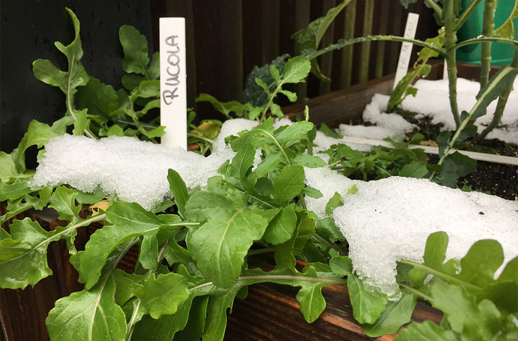 Der Geniale Gemüsegarten kennt keine Winterpause