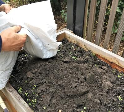 Kompost einfüllen Beetkasten