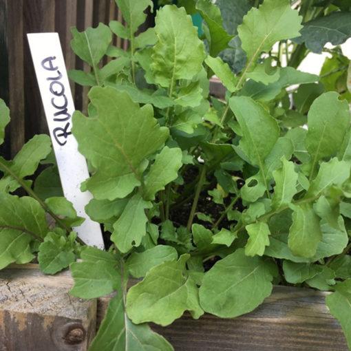 Der geniale Gemüsegarten: Pflanzschildchen