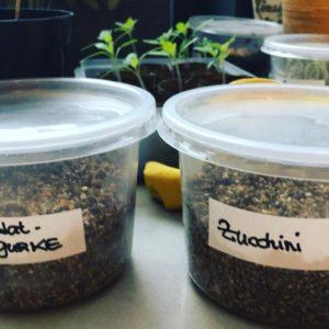 vermiculit-der-geniale-gemuesegarten-keime3