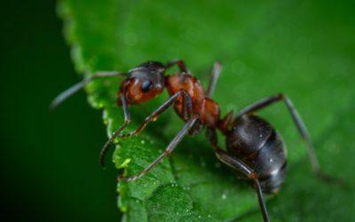 Die Ameise:  Dein Freund und Helfer im GG!