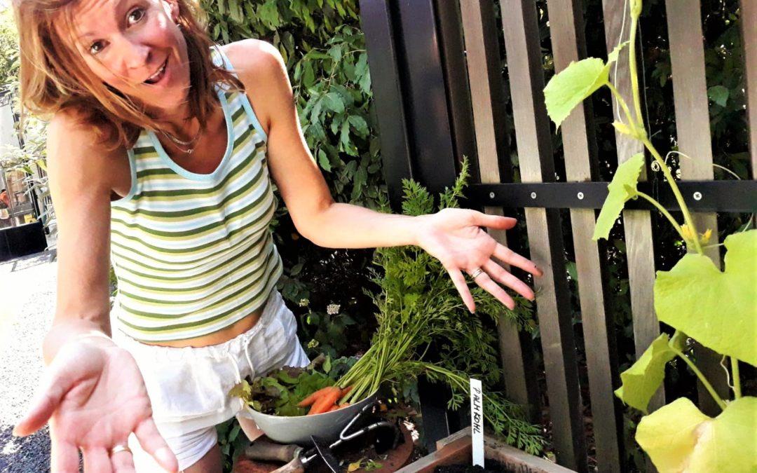 Sommerliche Ernte und Einsaat im Genialen Gemüsegarten